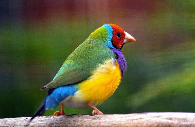 zangvogels en koffie